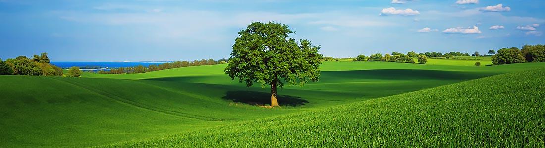 Beau paysage avec un arbre